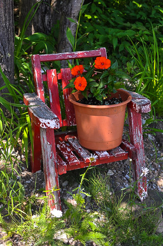 Muskoka sun impatiens on chair