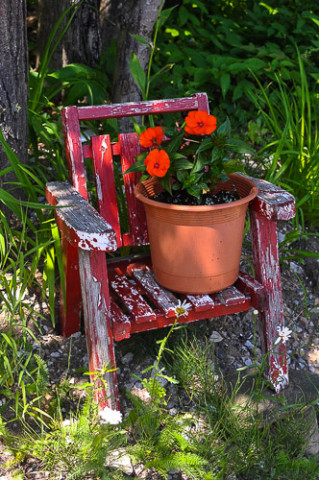 Muskoka sun impatiens on chair