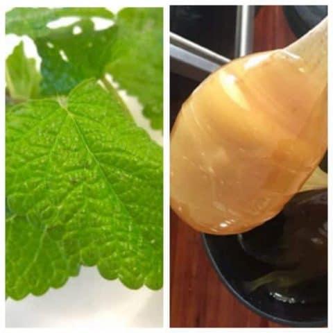 lemon balm and honey
